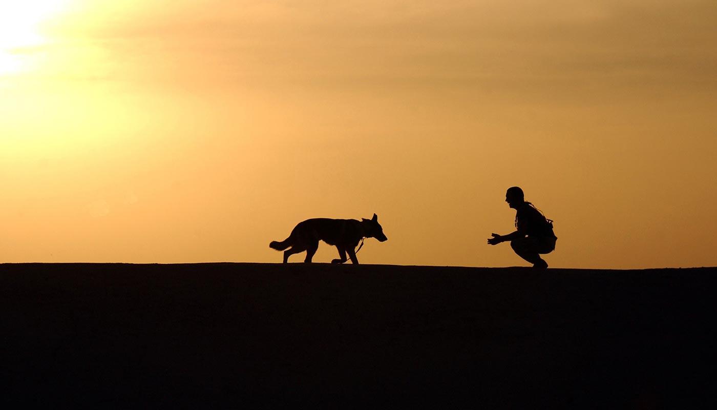 Comportementaliste canin Centre Canin Gaëtan Dupret à Audrehem, Saint-Omer, Calais, Lille, Boulogne-sur-Mer
