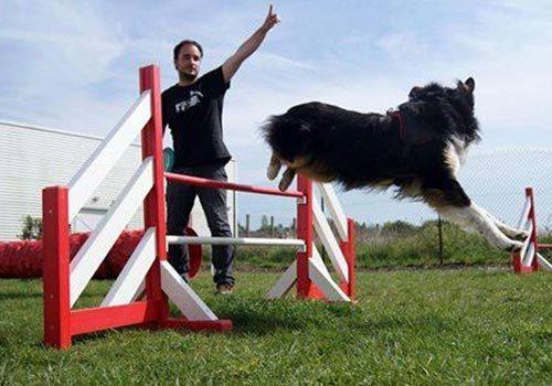 Educateur canin à domicile Centre Canin Gaëtan Dupret à Audrehem, Saint-Omer, Calais, Lille, Boulogne-sur-Mer